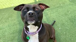 Cleveland APL Pet of the Weekend: A 5-year-old dog named Niko