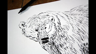 Polar Bear Painting Time Lapse