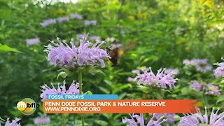 Fossil Friday – Walk the nature reserve at Penn Dixie Fossil Park and Nature Reserve