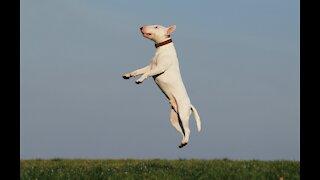 dog funny dog funny