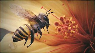 home the honey
