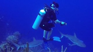 Divers put in danger when surrounded by hungry sharks