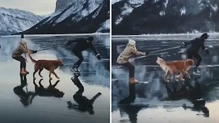 Dog accompanies couple skating on an icy lake