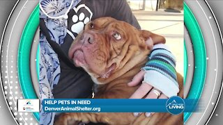 Denver Animal Shelter - Pets in Need