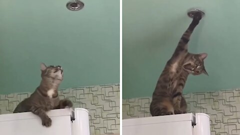 Cat literally screams when paw gets stuck in ceiling