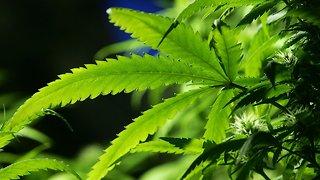Missouri Legalizes Medical Marijuana
