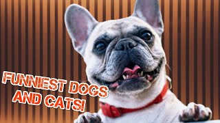 Funniest 🐶 Dogs and 😻 Cats - Awesome Funny Animals