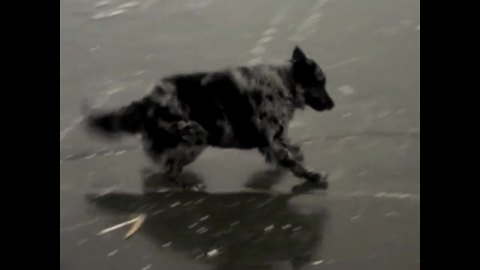 Dog struggles to play fetch on frozen lake