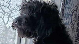 Dog splashes water on dry food