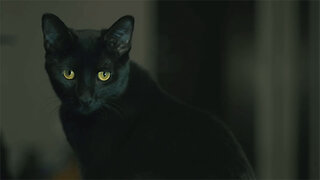 Black Cat Folklore and Superstitions: Explained