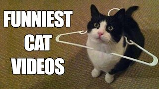 funny cat videos try not to laugh | Funniest Cats funny animals 2021