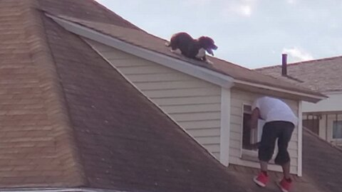 Man Heroically Scales Rooftop To Save Stranded Dog
