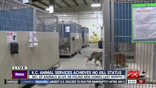 Kern County Animal Services reaches no-kill status