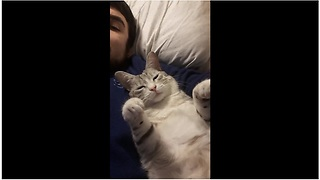 Cat refuses to let owner stop petting him