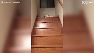 Questo gatto muove la testa in modo stranissimo