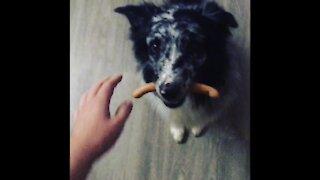 Good boy holding a sausage like a champ