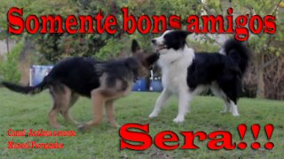 Brincadeira entre cães