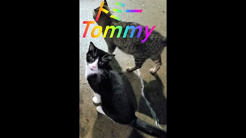 This is a tribute to Tommy. He was hit by a car. 4/9/21.これは、トミーへのオマージュです。彼は車に轢かれてしまいました。4/9/21.