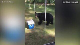 Urso invade festa de aniversário e acaba com o bolo