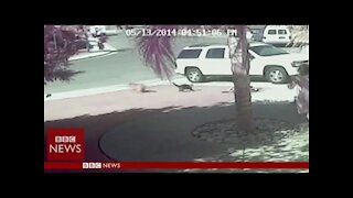 Hero Cat Saves a Kid From Dog Attack!