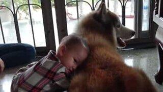 Cão mostra muito amor e paciência por bebê