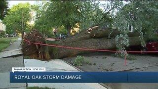 Storm damage in Royal Oak