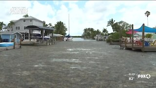 Matlacha residents concerned over growing algal blooms in canals