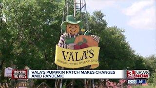 Vala's Pumpkin Patch Makes Changes Amid Pandemic