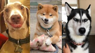 Funny DOG Videos You Can't Stop Without laugh at all the DOGS
