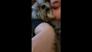 Grumpy doggy growls every time owner hugs him too much