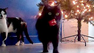 Bad Cat vs Good Cat