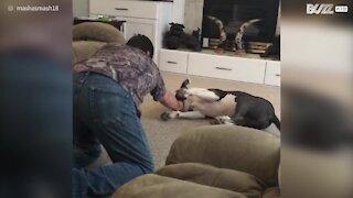 Cão adora ser arrastado no chão pelo dono