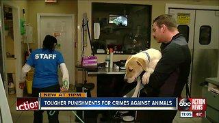 Florida congressmen's bill would make animal cruelty a federal felony