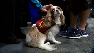 Sheboygan County dispatch center introduce therapy dogs