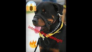 Intense dog training