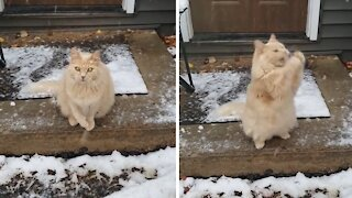 Cat loves to catch falling snowflakes
