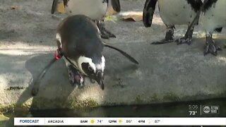 ZooTampa taking steps to protect animals and people during reopening