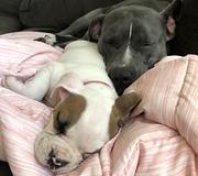 Little girl preciously naps with four sleeping doggies