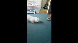 Dog And Parrot Have Fun Playing Together