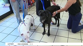 Gulf Coast Humane Society seeking help for shelter animals in SWFL