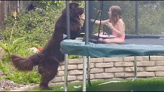 Bear-like dog tries to snatch girl's lunch