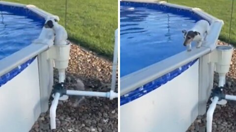 Clever puppy uses filter to exit swimming pool
