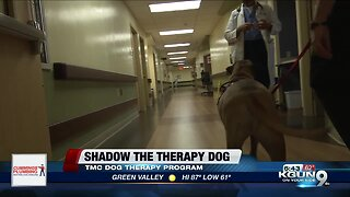 Furry Friends bring smiles to people at TMC
