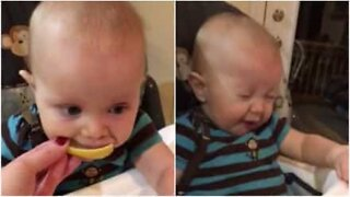 Baby tries lemon for the first time