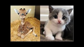 Cutest baby animals Cute moment of the Animals Videos Compilation