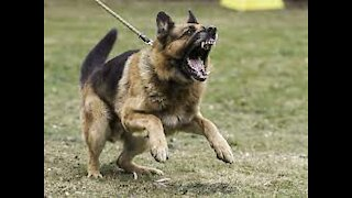 how to properly defend yourself against a dog attack