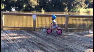 Morsom liten gutt jager etter fugler på balanse sykkel