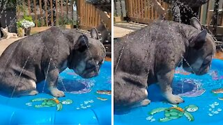Puppy nearly falls asleep while chillin' in the pool