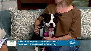 Pixie from Foothills Animal Shelter Is Ready to Find Her Fur-Ever Home