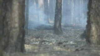 Indian River County brush fire threatens several homes, authorities say